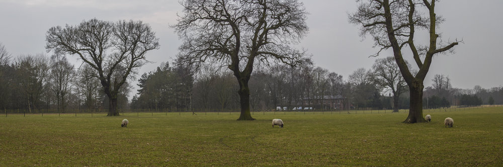"3 TREES AND 4 SHEEPS   |   Image size: 36""x12""   