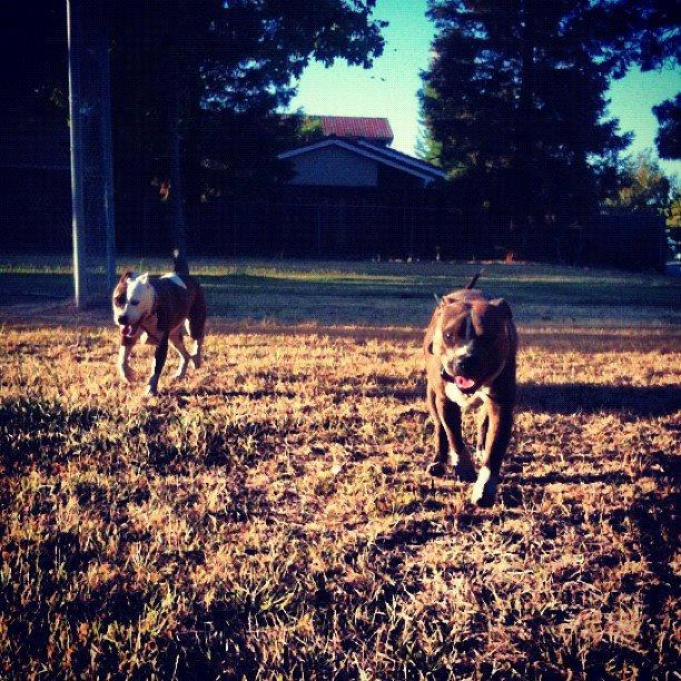 primal canine dog training