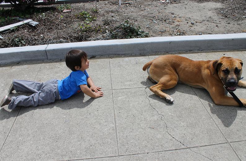 dog family primal canine dog training