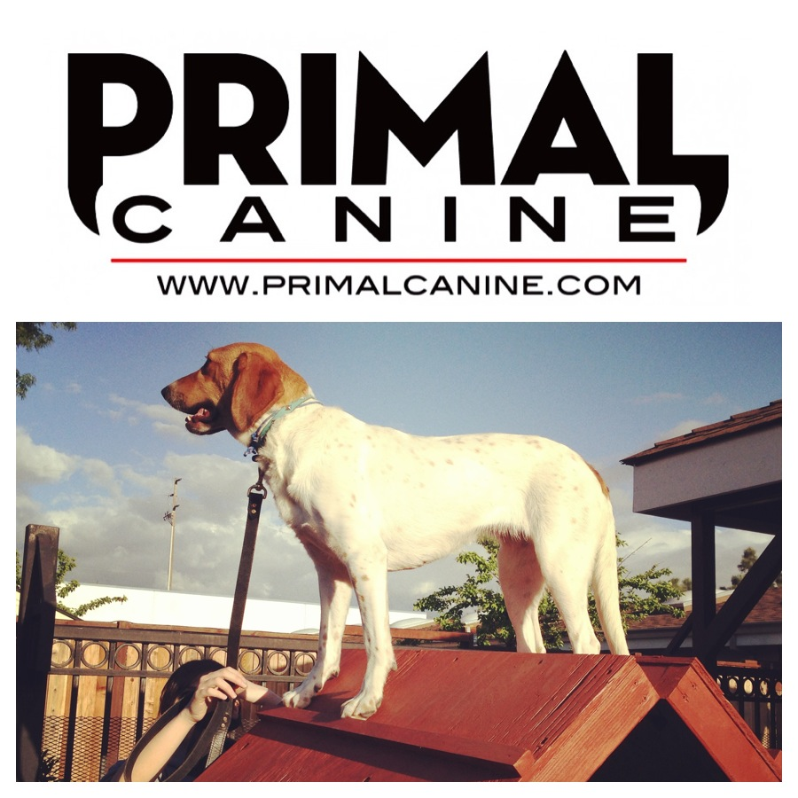 hazel primal canine stand dog training