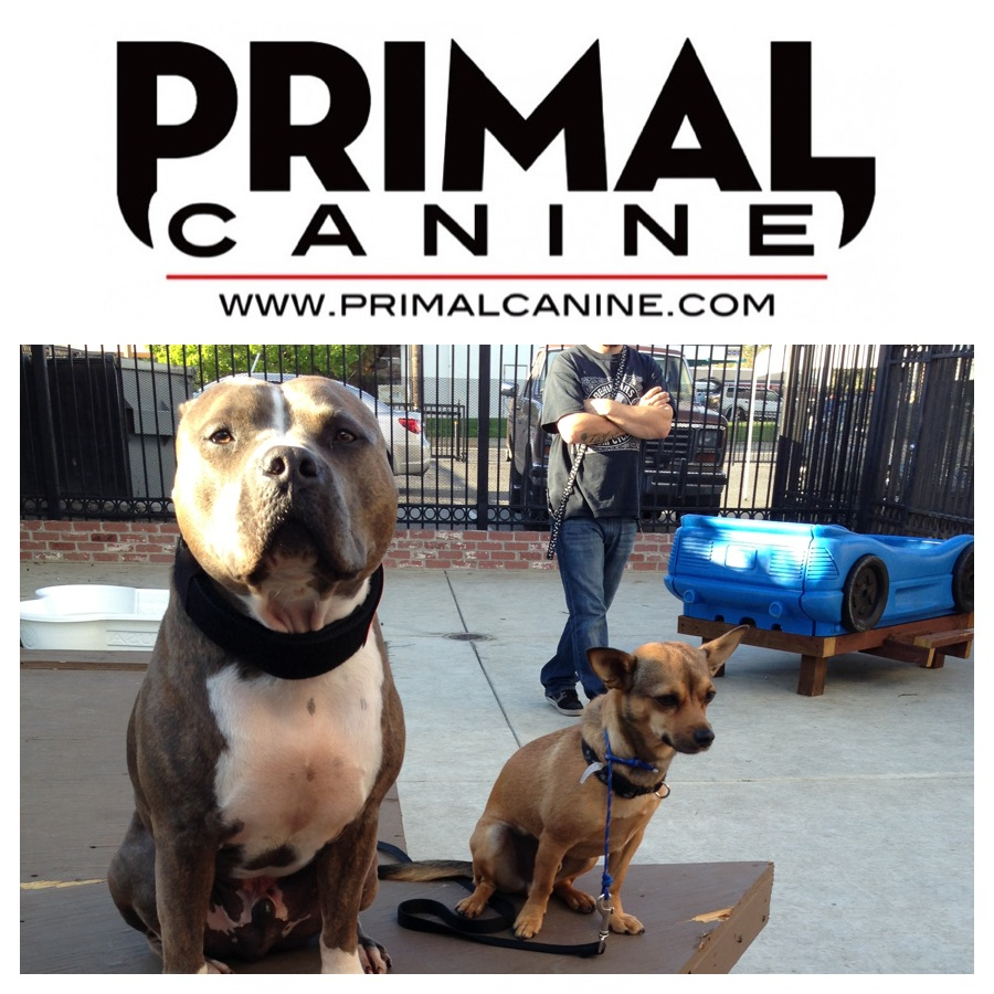 primal canine social dog training