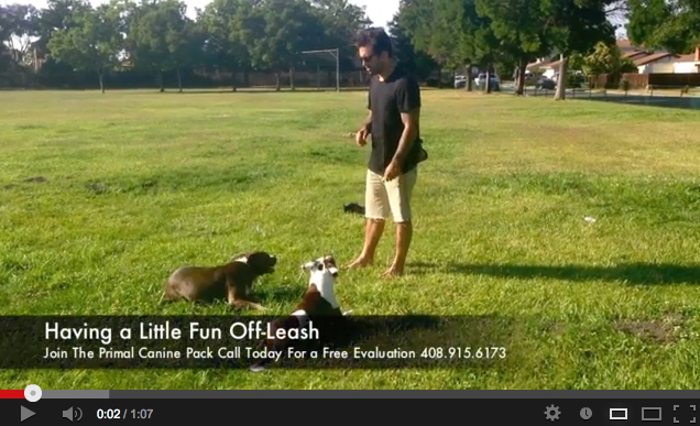 primal canine off leash fun dog training