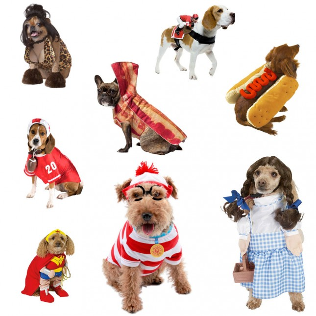DOG COSTUMES primal canine san jose dog training