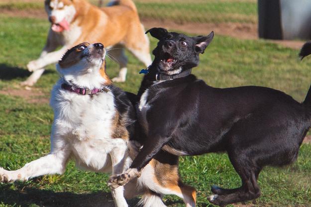 primal canine morgan hill dog training