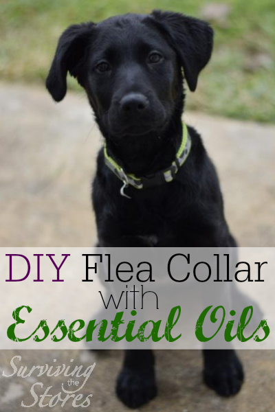 DIY Flea Collar With Essential Oils Ingredients: 1/2 teaspoon Rubbing Alcohol 1 drop Cedarwood Essential Oil 1 drop Lavender Essential Oil 1 drop Citronella Essential Oil 1 drop Thyme Essential Oil 4 garlic oil capsules Directions: Get any collar that's made of material (i.e. no chains) and soak it in the above mixture. Lay it out to dry. Once it's dry, place it on your animal's neck. Repeat process at least once per month. (Depending on where you live and how often your dog is in flea-infested environments.)   You can also use essential oils in a spray bottle as a flea repellent! Just mix 1/2 cup of distilled water, a drop or two of Thieves soap or castille soap, and 8-16 drops (total) of your preferred essential oils that fleas hate. Here's a list of flea-repelling oils: Eucalyptus radiata, Melaleuca alternifolia (Tea Tree), Lemongrass, Pine, Cedarwood, Peppermint, Lemon, Lavender, Orange, Melrose, Palo Santo, Thyme, and Citronella. If you're new to essential oils, what might be best is to start off with the Purification essential oil blend that's in the Premium Essential Oils Starter Kit. Purification contains citronella, lemongrass, rosemary, Melaleuca alternifolia, lavender, and myrtle so there are several of the flea-repelling oils in there.