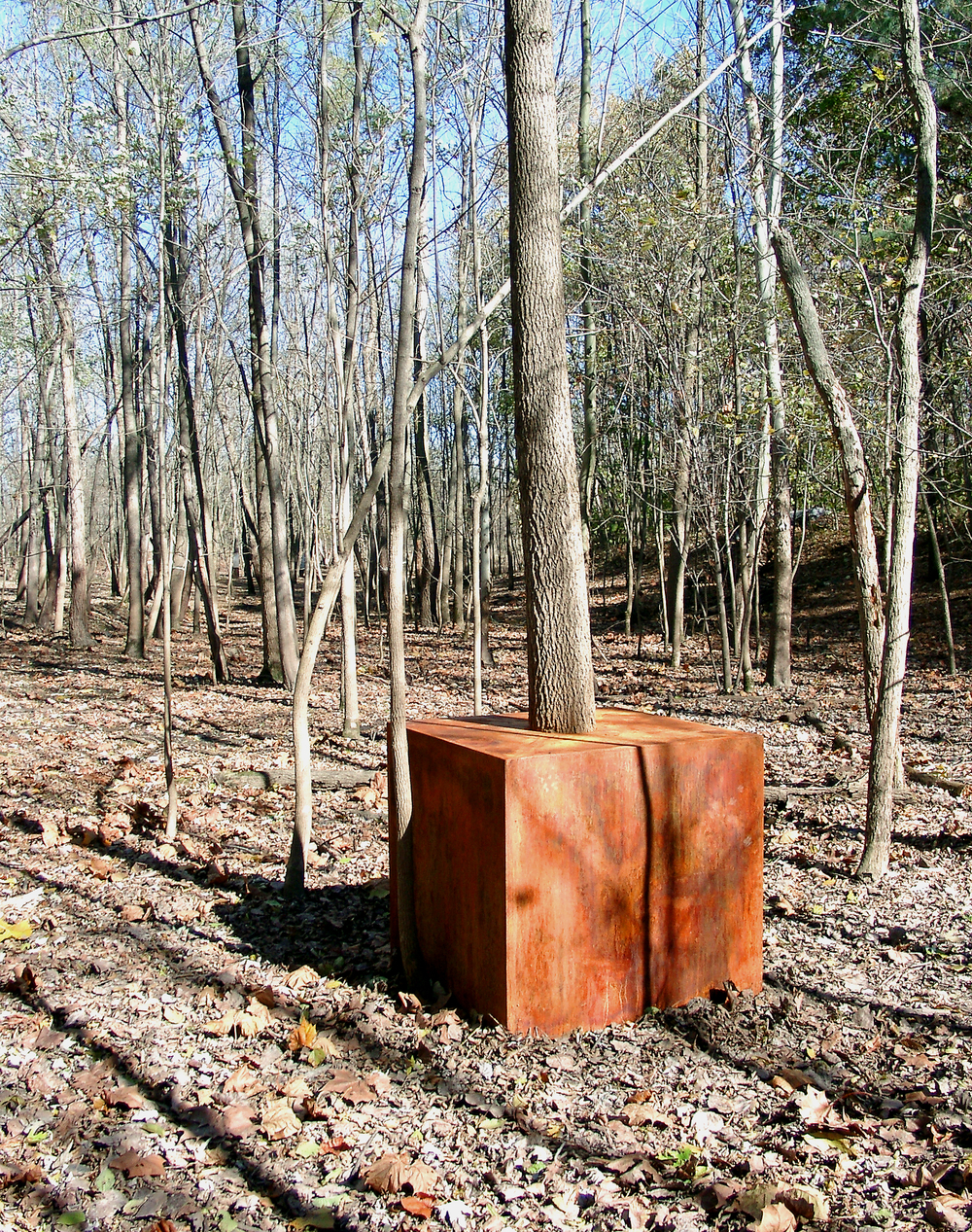 sculpture_tree_cube_snow_flood_fall_siu_carbondale_il_2003-04-27_[15 - tree cube, 2004]_12732.jpg