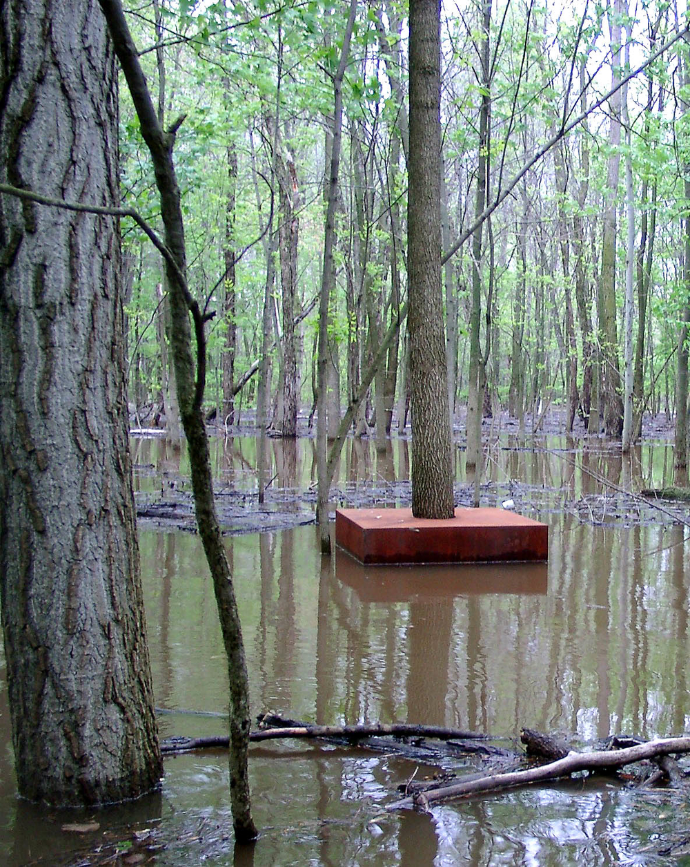 sculpture_tree_cube_snow_flood_fall_siu_carbondale_il_2003-04-27_[17 tree cube flooded]_12818.jpg