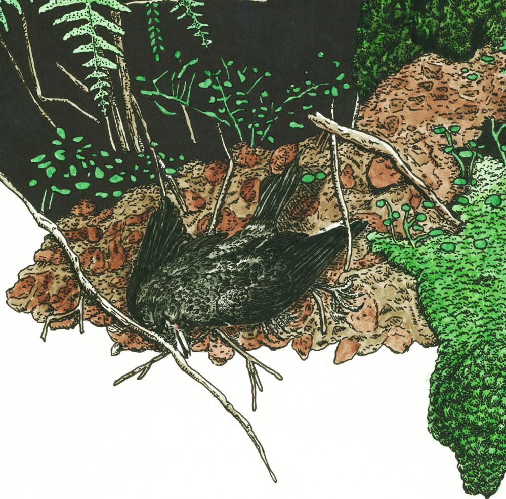 Vindens Hvisken og Døde Trærs Forrådnede Sjarm detail (2011)