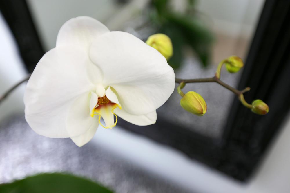 orchid03.jpg