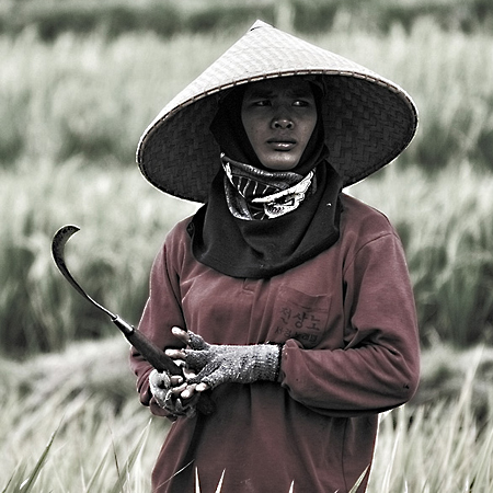 rice-people-073.jpg