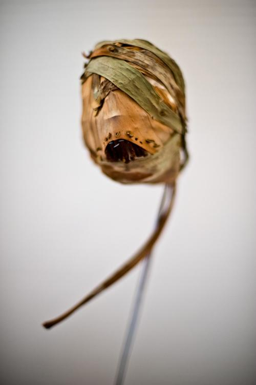 MY SHRUNKEN HEAD - Ethnobotanical Object