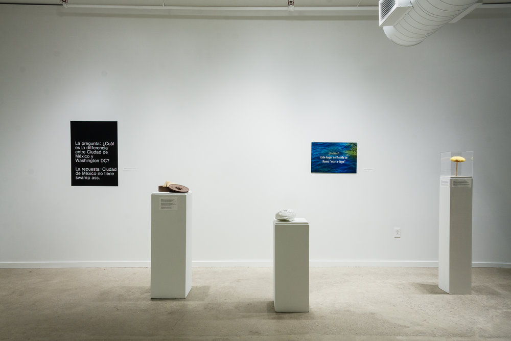 Installation View, CHISTES MEXICANOS / MEXICAN JOKES, part of The First 100+ Days, SPACES (2017)