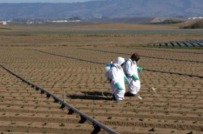 chemical_farming-396x262-35240-20090518-1.jpg