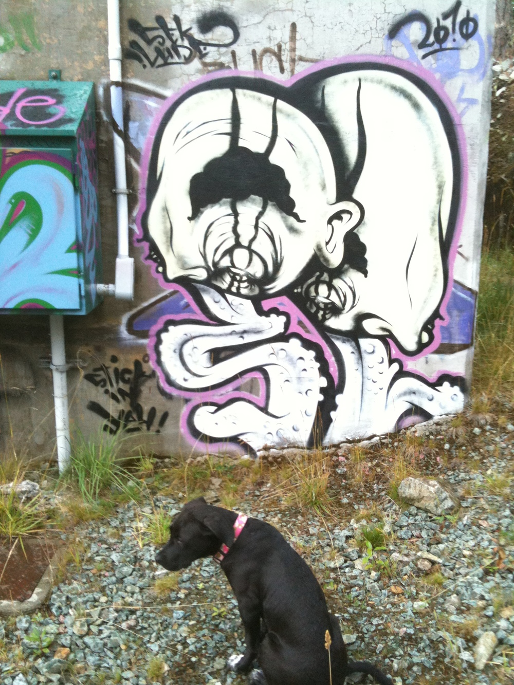 Kandi is also unsure of these creepy things... Emerald Estates, Whistler. 2011