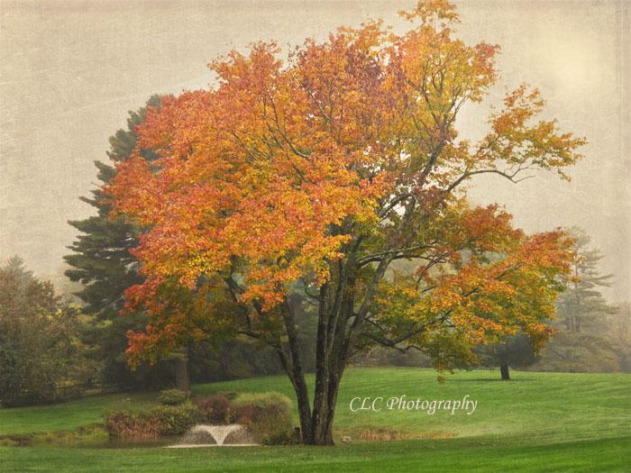 Fall Colors, Wenham, Mass...