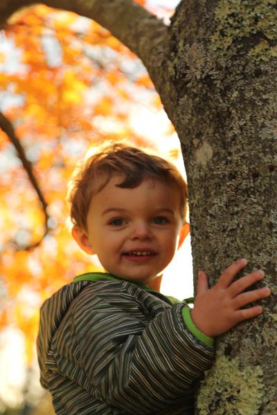 Climb a tree..enjoy the view..L.B
