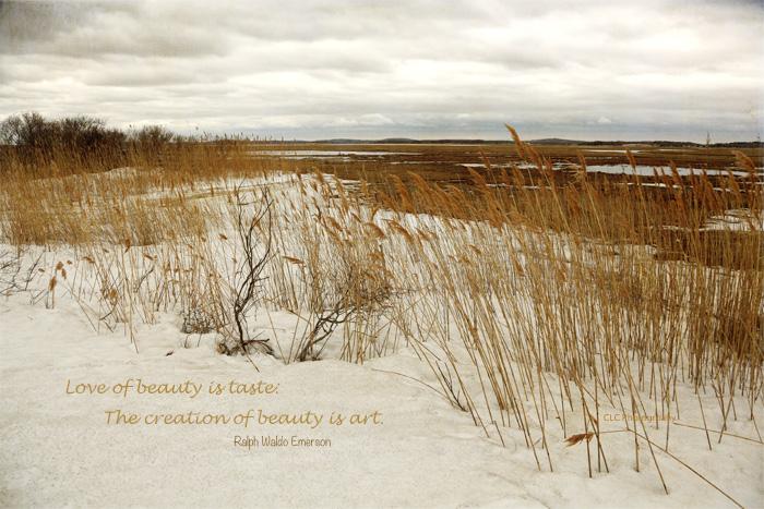 Seagrass, Plum Island, Mass...
