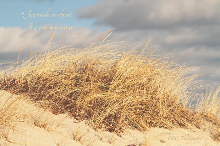 Sea Grass..Cranes Beach, Ipswich Mass.