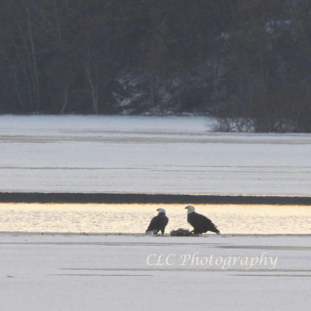 Eagle Kill...Wenham Lake, Wenham Mass.