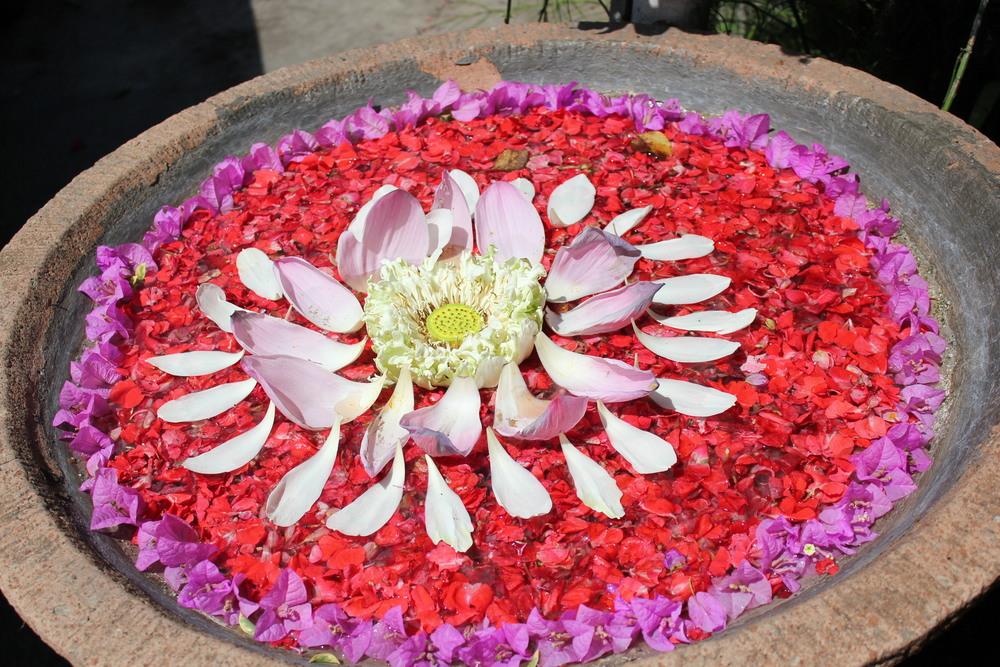 Lotus (1).JPG
