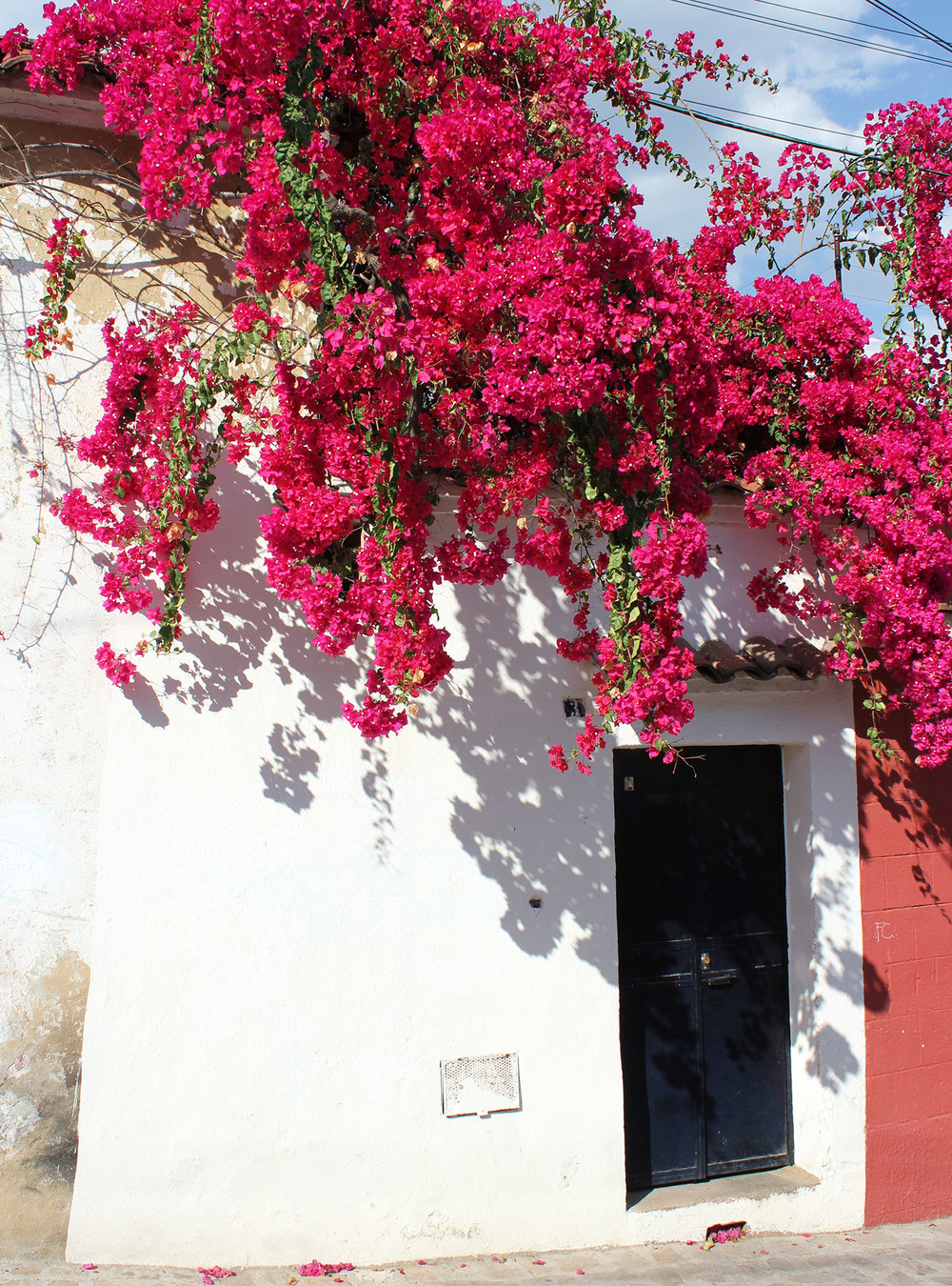Flowers make everything better: Oaxaca