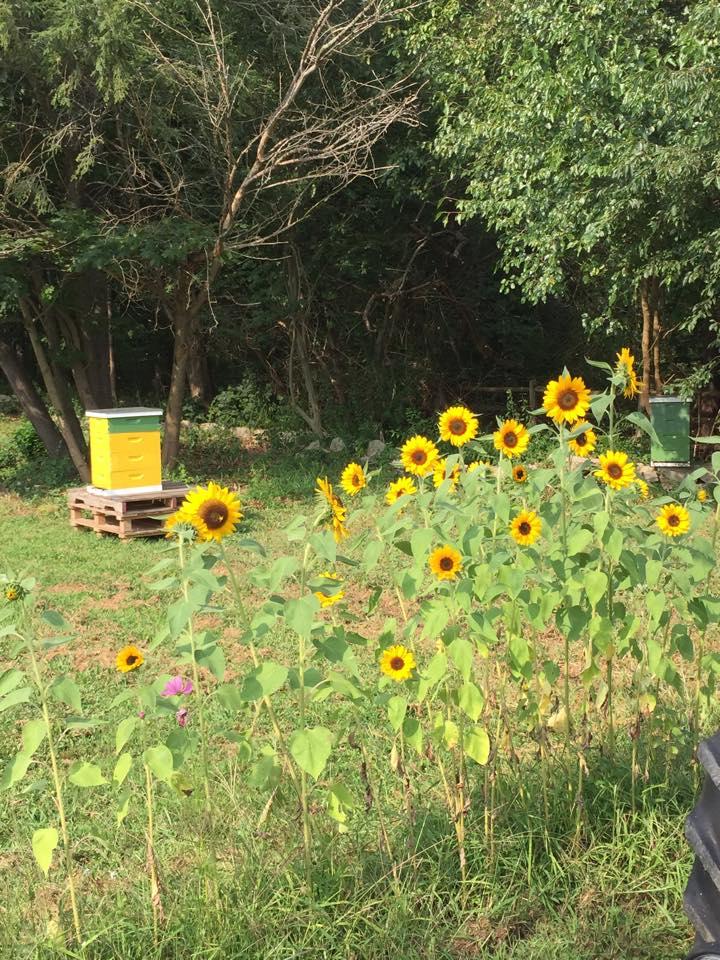 flowersbees.jpg