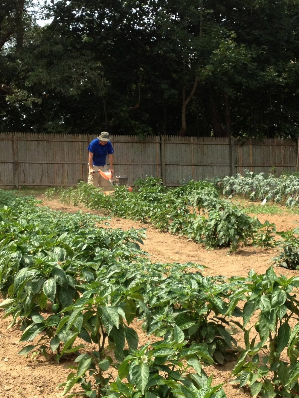 gardentilling.jpg