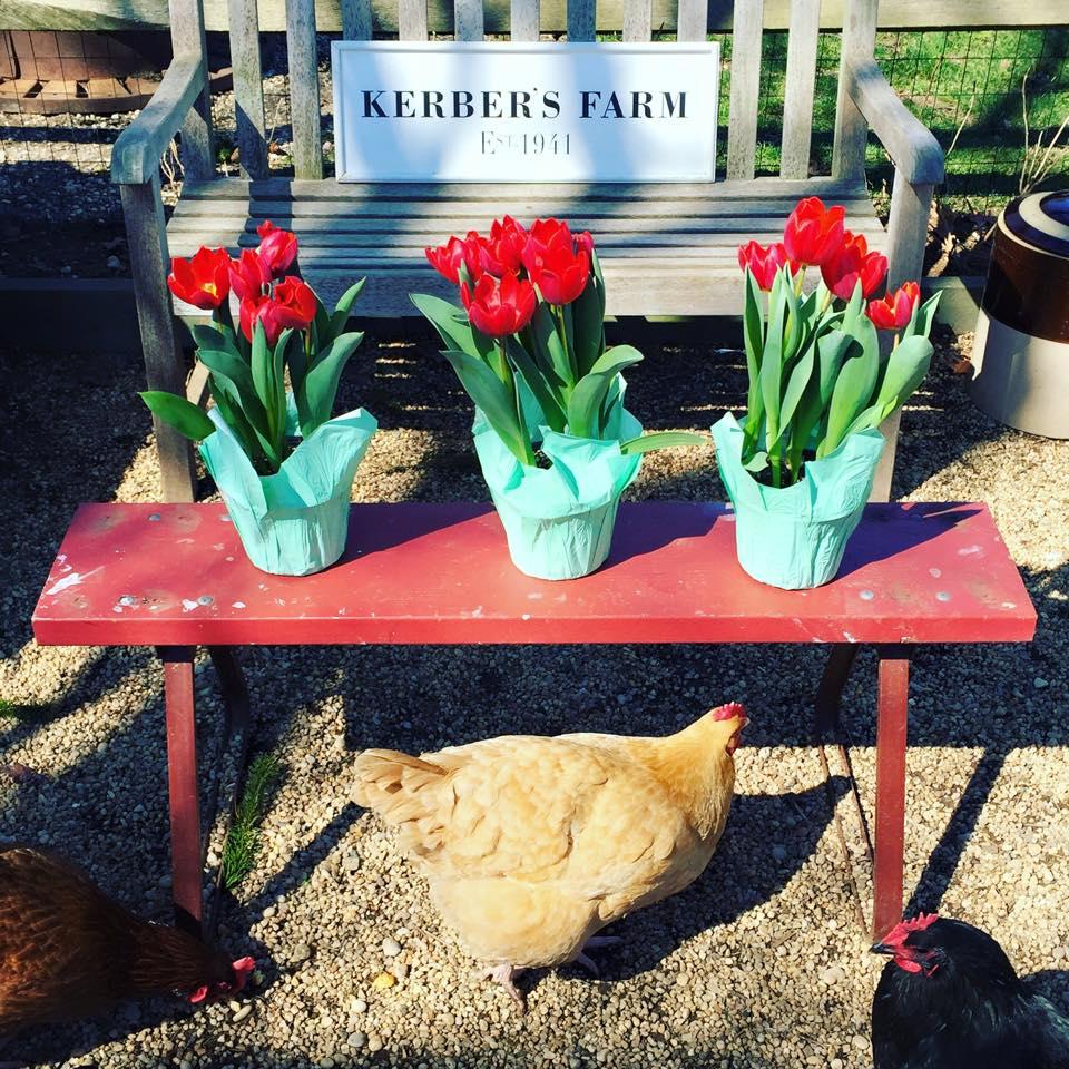 tulipsonbench.jpg