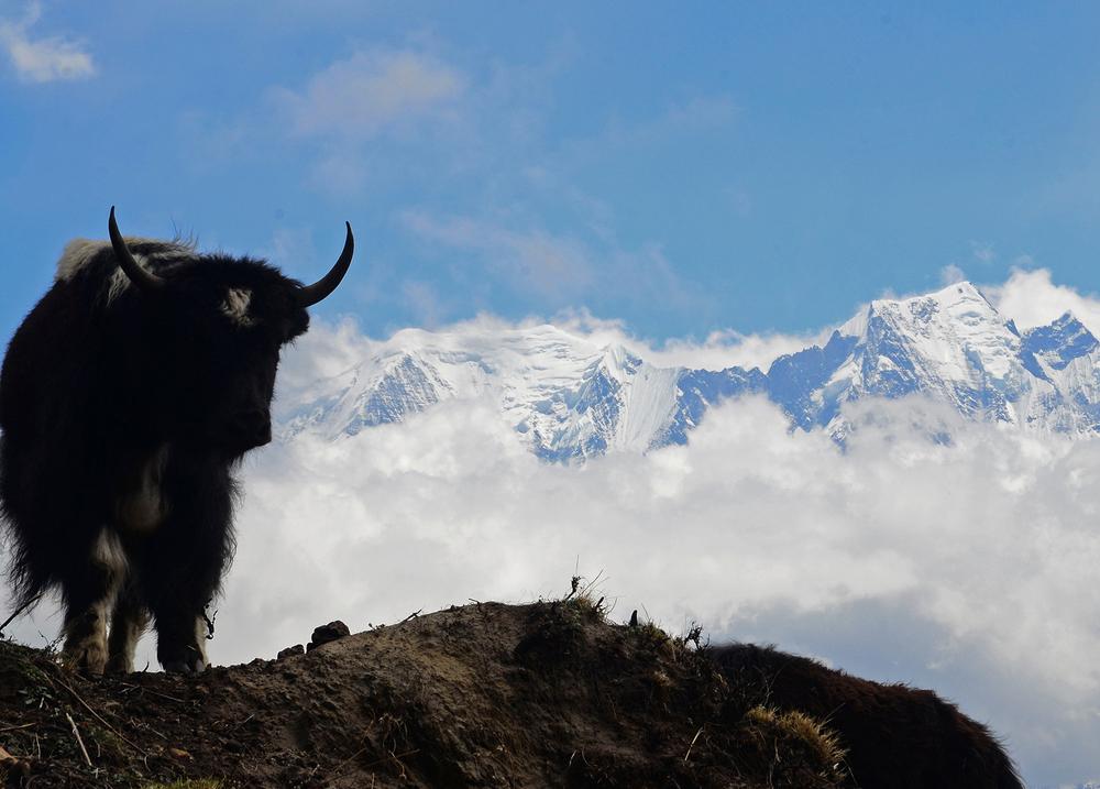 NepalPostcard21.jpg