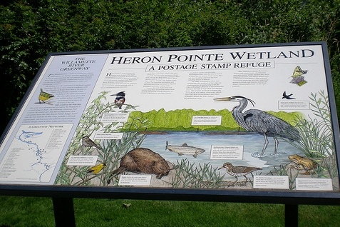 Heron Pointe has its own Wetland namesake.