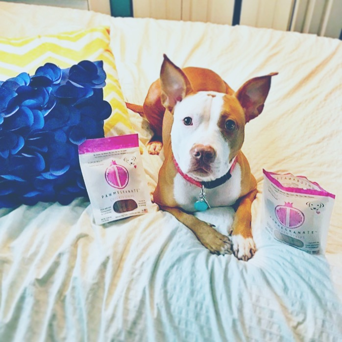 "@cleothepit ""After realizing how much I love @pawmegranate treats, I can't help myself but think about all the other flavors I need to try! These chicken strips were BARK-TASTIC! Such healthy and yummy treats. Fuurendss, you need to try these. They will make you drool."""