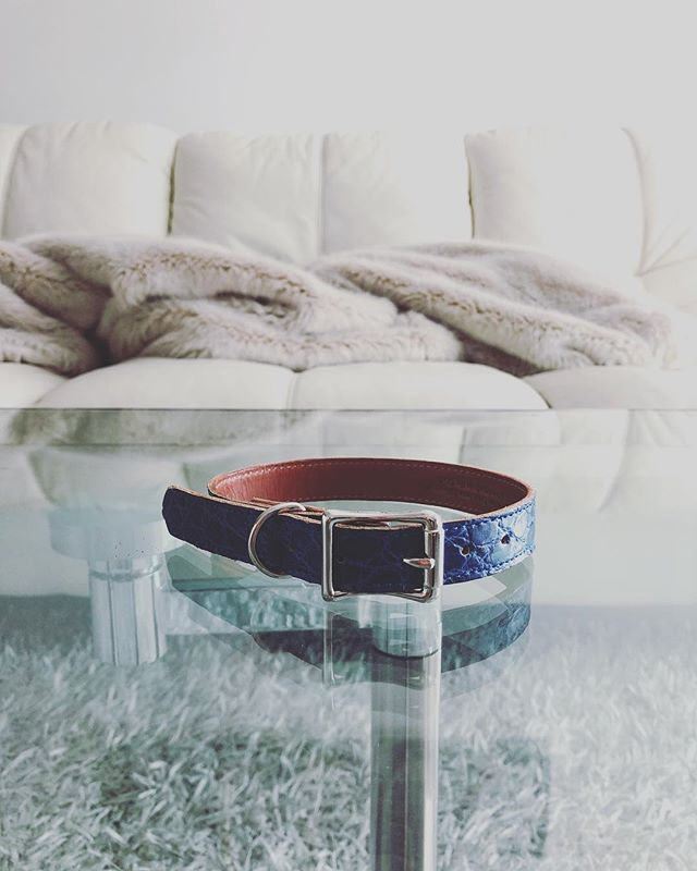 Exotic Accessories. For Dogs. #luxurylifestyle #alligator #dogcollar #thegoodlife  Follow @bostontreathouse for exclusive deals on our new exotic brands that are launching this spring!