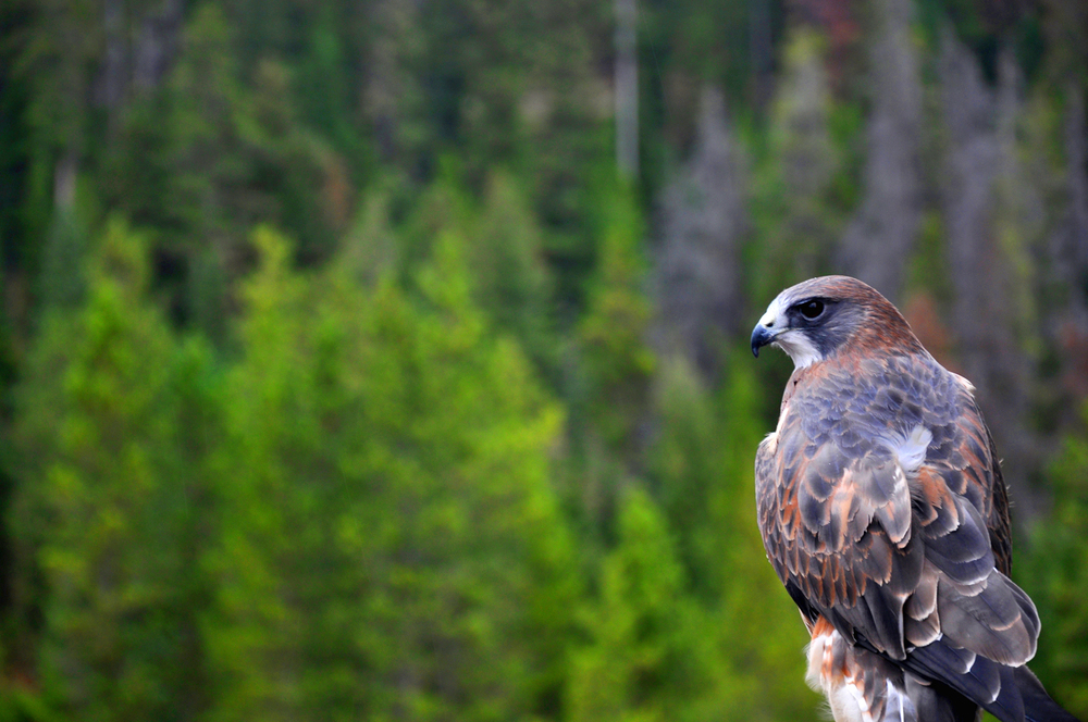 DSC_0378_HAWK_PHOTOSHOP.jpg