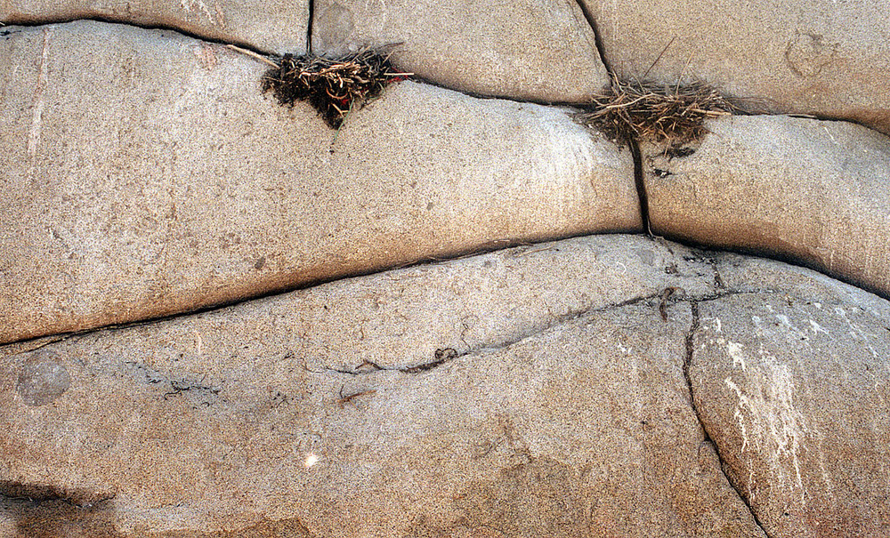 cormorant granite.jpg