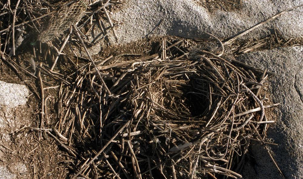 gull nest.jpg