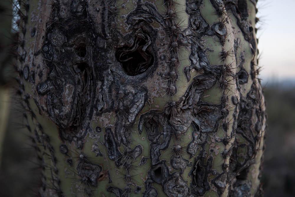 old lady cactus.jpg