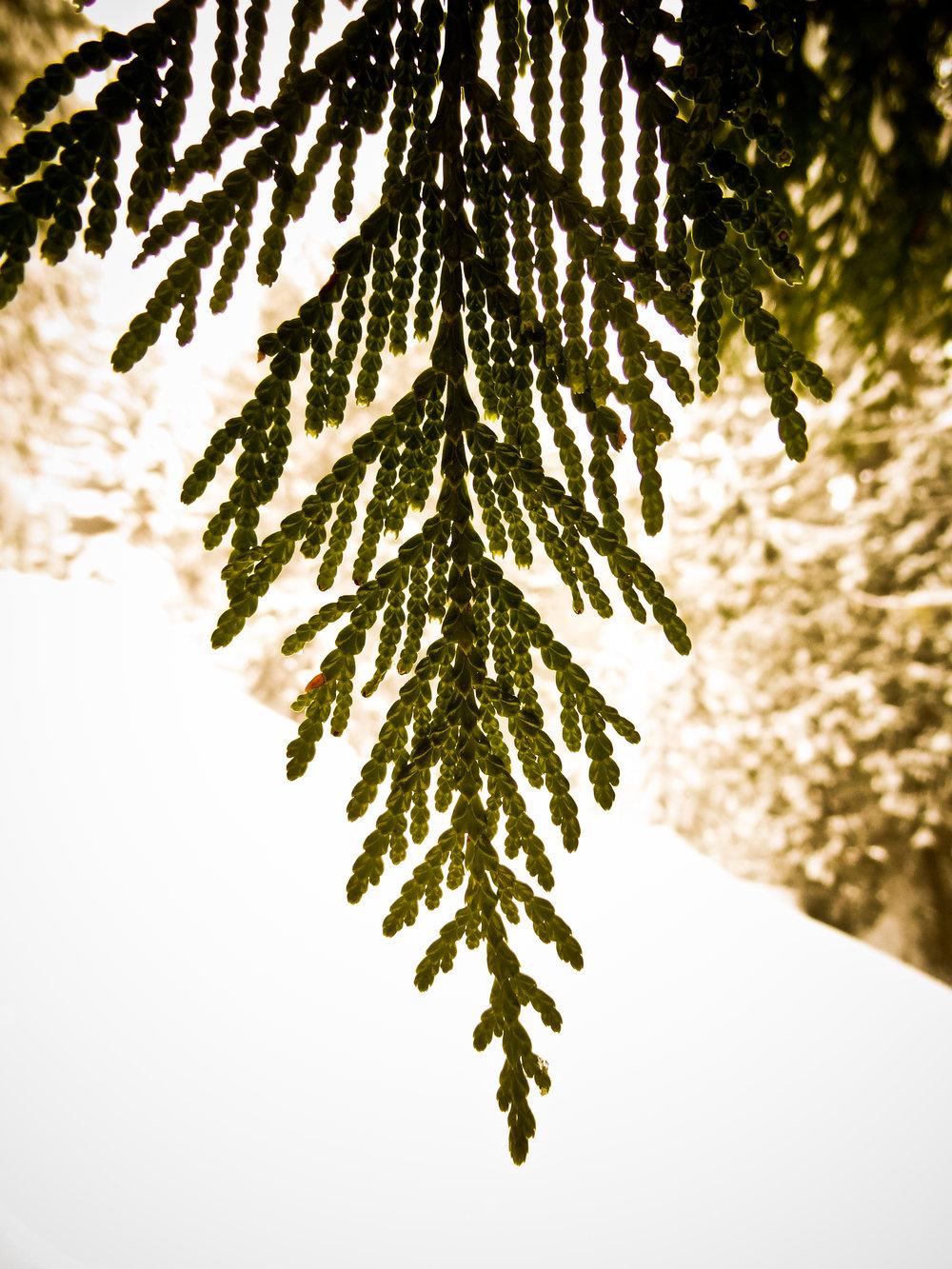 tree_end.jpg