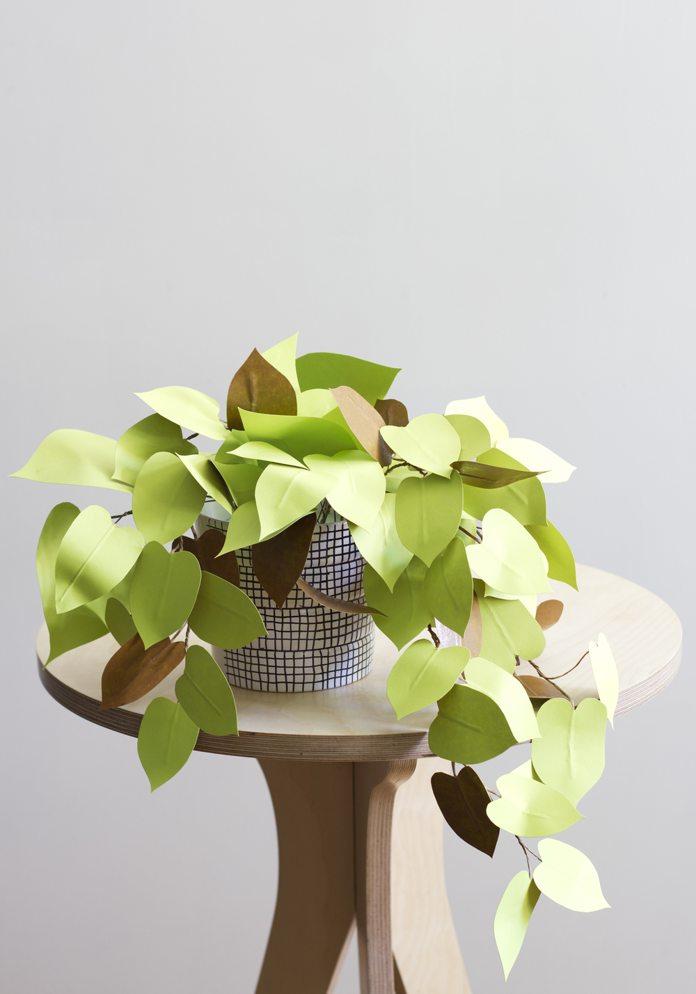 Corrie_Hogg_paper_heartleaf_philodendron_plant_DIY_4.jpg