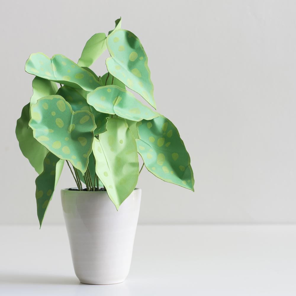 corrie_beth_hogg_paper_plant_begonia_green.jpg