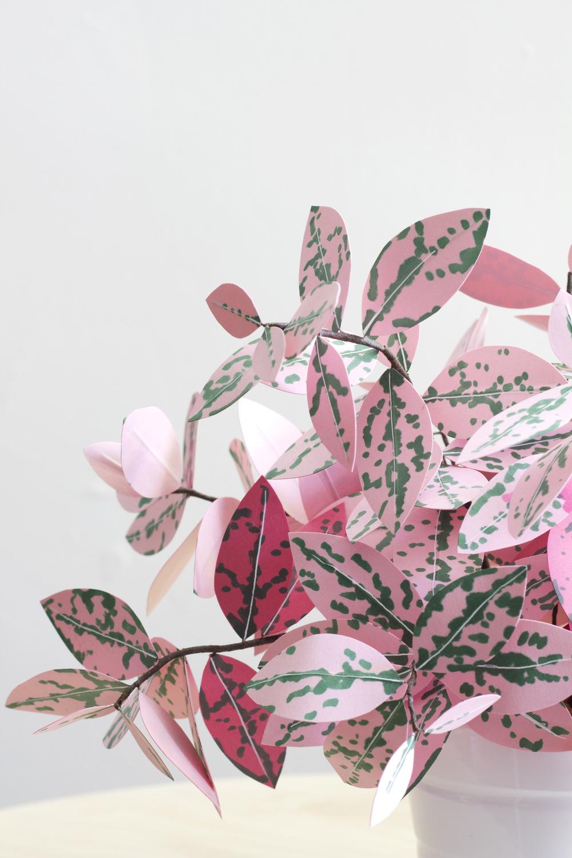 Corrie_Beth_Hogg_paper_plant_polkadot_close.jpg