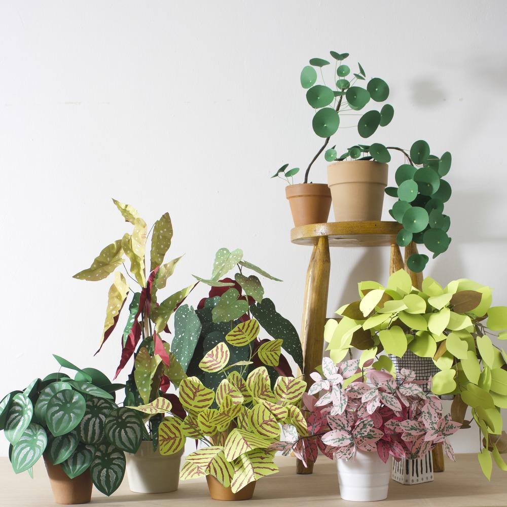 Corrie_Hogg_paper_plants_multi2.jpg