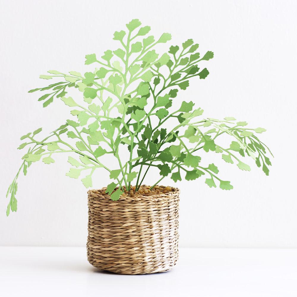 corriehogg_paperplant_maidenharifernplant.jpg