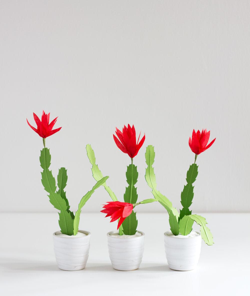christmas_cactus_2.jpg