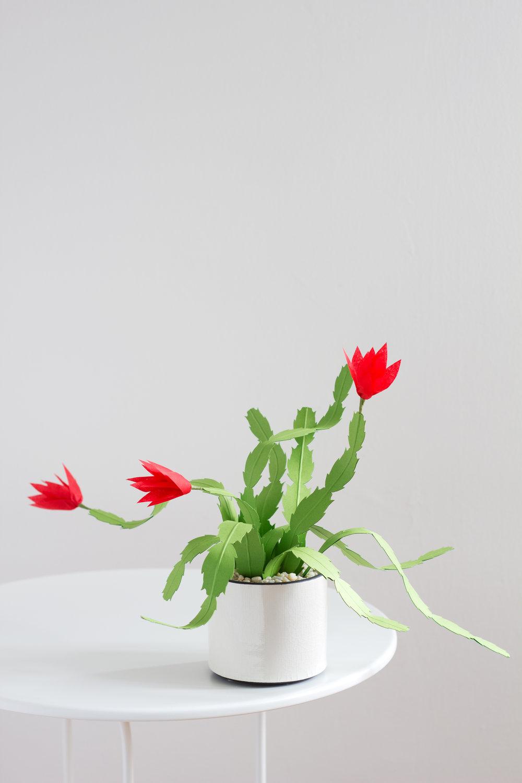 christmas_cactus_3.jpg