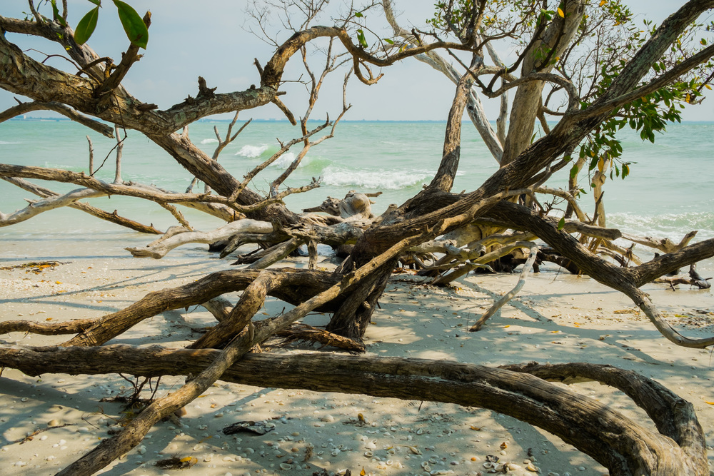 jungle tree on beach.jpg