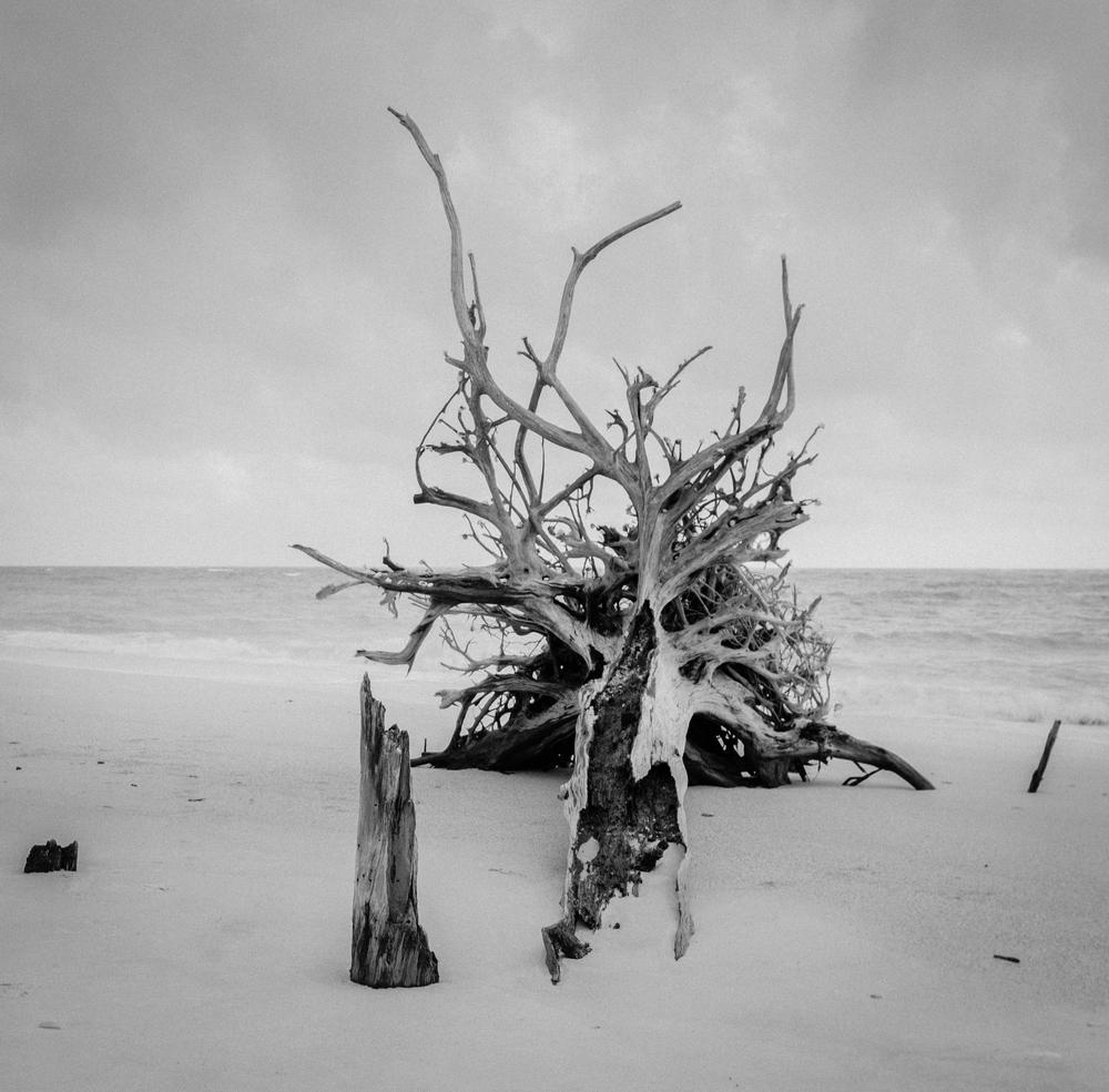 B&W deadwood 2.jpg