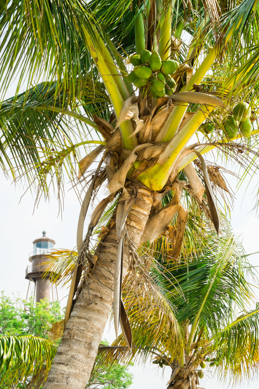 lighthouse & coconuts.jpg