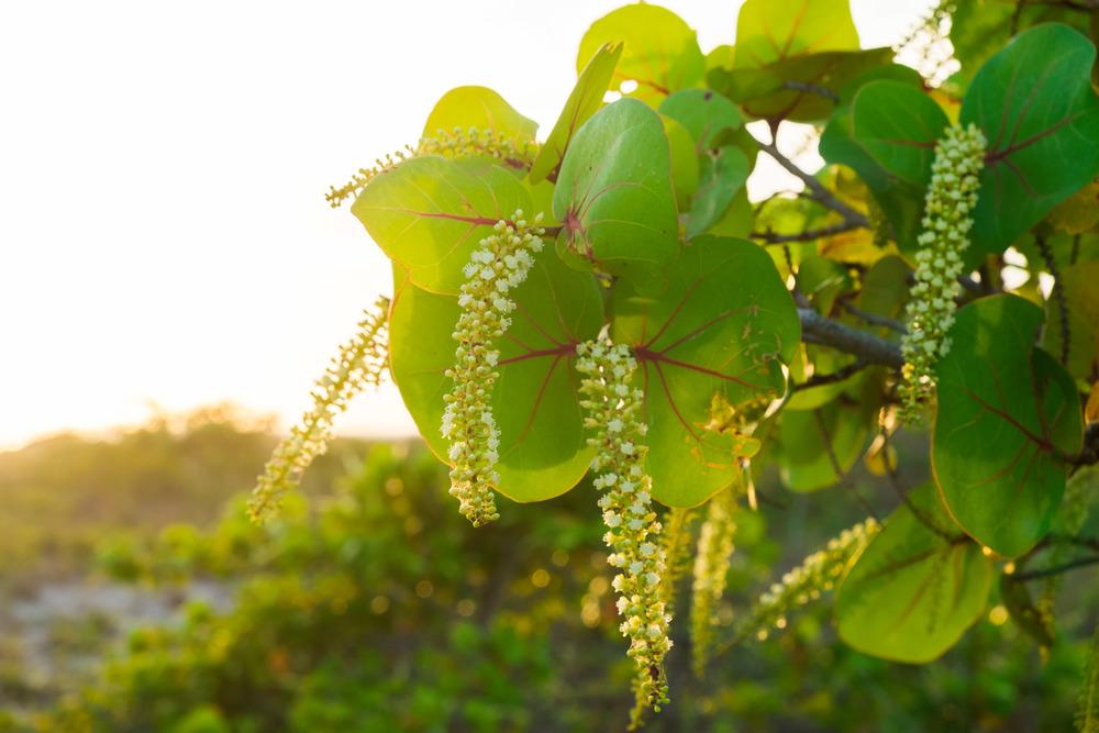 plant & sunset.jpg
