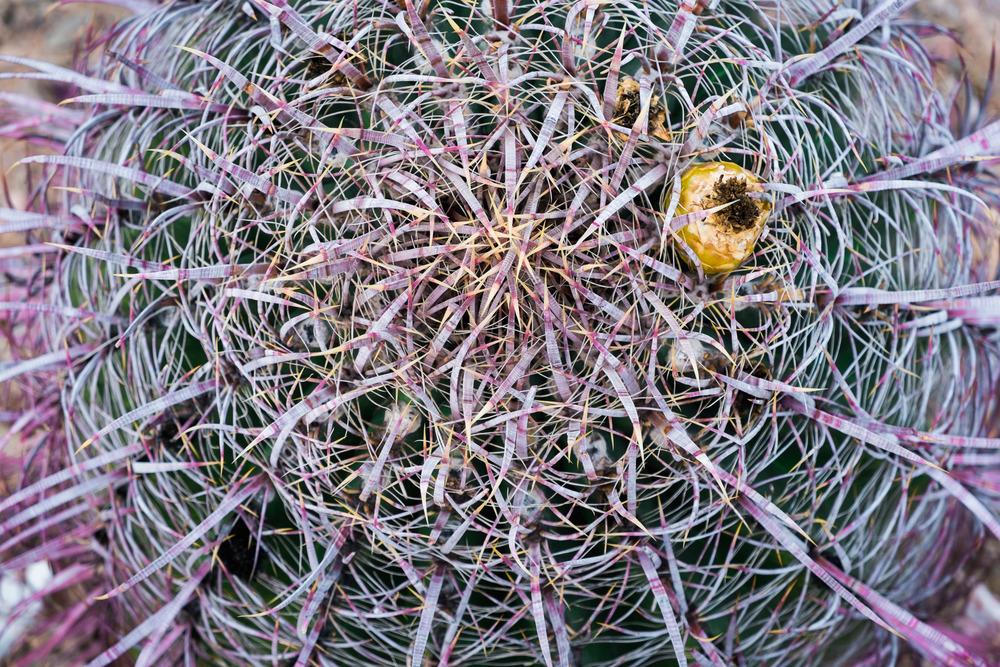 close up cactus.jpg