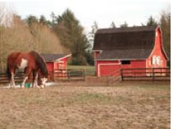 Existe la posibilidad de hacer tus prácticas en un rancho o granja canadiense. Debes saber y tener práctica en montar a caballo.